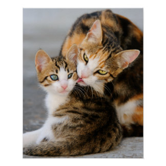 Poster Le chat de mère aime le chaton mignon