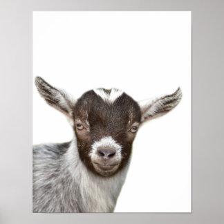 Poster Le coup d'oeil de photo d'animal de ferme de