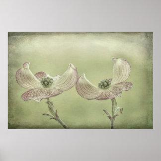 Poster Le plan rapproché du cornouiller rose fleurit  
