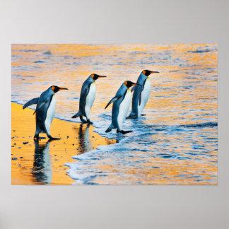 Poster Le Roi pingouins à l'affiche de lever de soleil