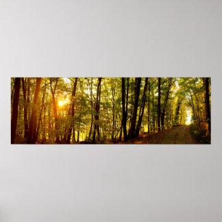Poster Lever de soleil de forêt