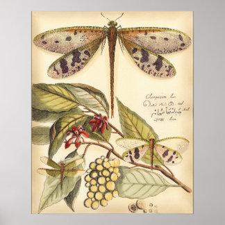 Poster Libellules avec le feuille et le fruit