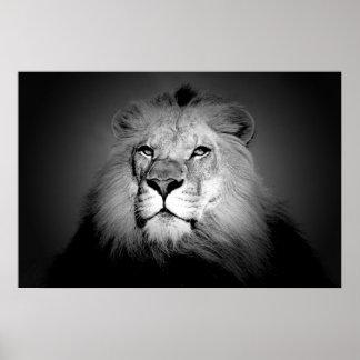 Poster Lion - photographie d'animal sauvage