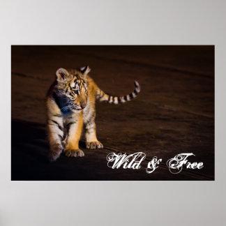 Poster Marche de CUB de tigre