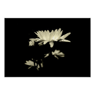 Poster Marguerite avec des gouttes de pluie - noir et