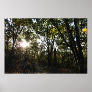 Poster Matin d'automne au parc national de Shenandoah