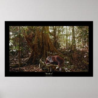 Poster Mère et jeune orang-outan dans la forêt tropicale