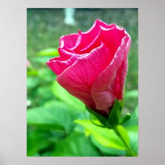 Poster Mi-Pli rose