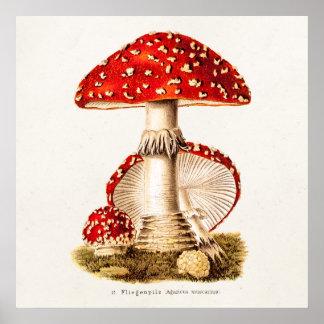 Poster Modèle vintage de champignons de rouge de