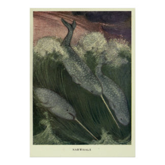 Poster Narwhal vintage Painting (1909)