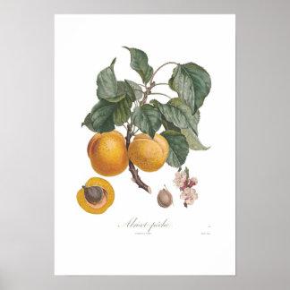 Poster Nectarine