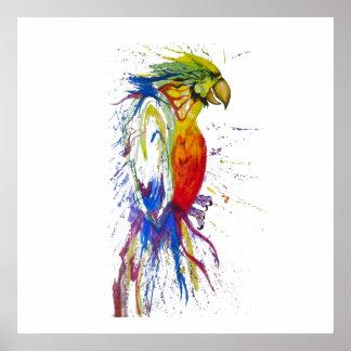Poster Oiseau de perruche de perroquet
