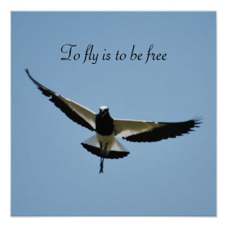 Poster Oiseau de pluvier en vol