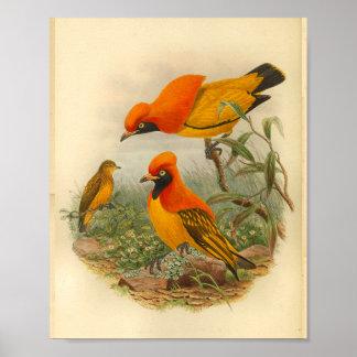 Poster Oiseau d'or de copie vintage jaune rouge de