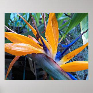 Poster Oiseau d'usine de paradis floral