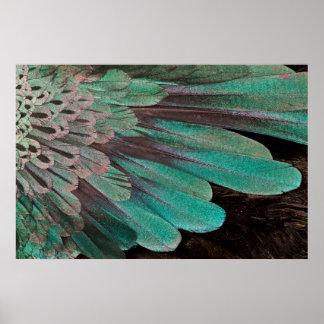 Poster Oiseau superbe des plumes de paradis