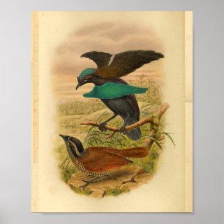 Poster Oiseaux de copie vintage bleue de Brown de paradis
