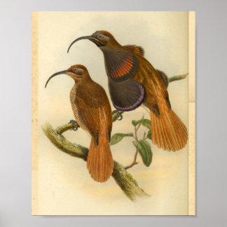 Poster Oiseaux de copie vintage de couleur orange
