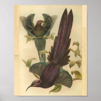 Poster Oiseaux de copie vintage de couleur pourpre