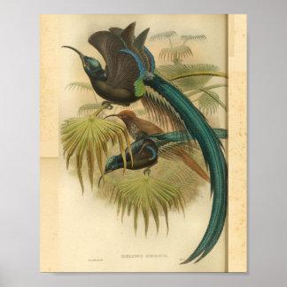 Poster Oiseaux de copie vintage de couleur verte de bleu