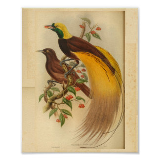 Poster Oiseaux de copie vintage de jaune de vert de