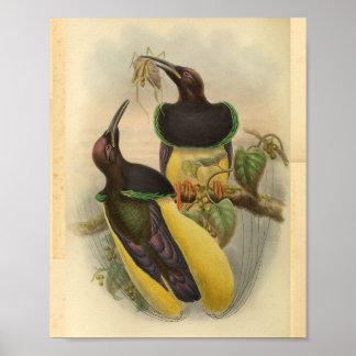 Poster Oiseaux de copie vintage de jaune de vert d'oiseau