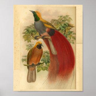 Poster Oiseaux de copie vintage jaune rouge de paradis