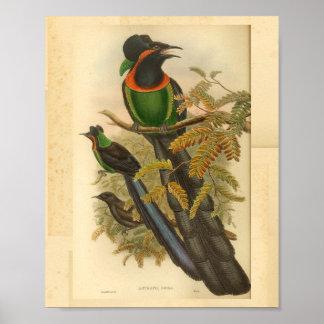 Poster Oiseaux de copie vintage rouge de vert de paradis