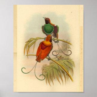Poster Oiseaux de copie vintage rouge de vert d'oiseau de