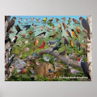 Poster Oiseaux de jardin de l'Indiana