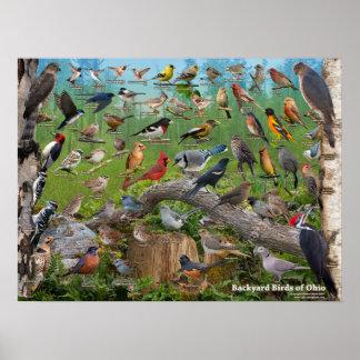 Poster Oiseaux de jardin de l'Ohio