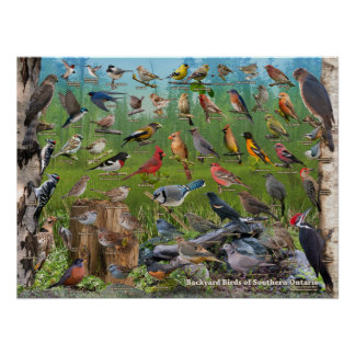 Poster Oiseaux de jardin d'Ontario du sud