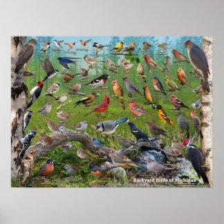 Poster Oiseaux de jardin du Michigan