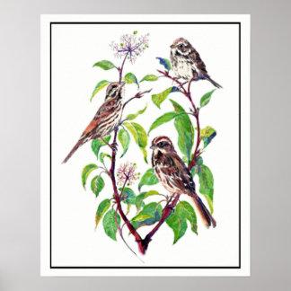 Poster Oiseaux de moineau d'aquarelle sur l'art de
