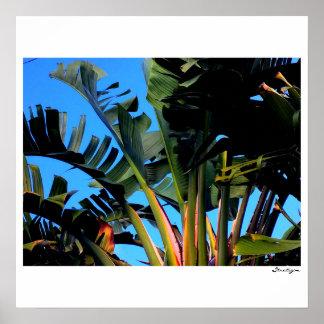 Poster Oiseaux du paradis la Floride 2