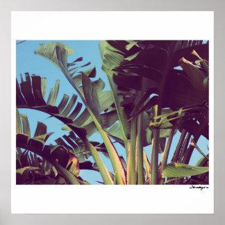 Poster Oiseaux du paradis la Floride 3