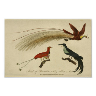 Poster Oiseaux vintages de copie d'histoire naturelle de