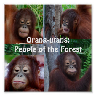Poster Orangs-outans