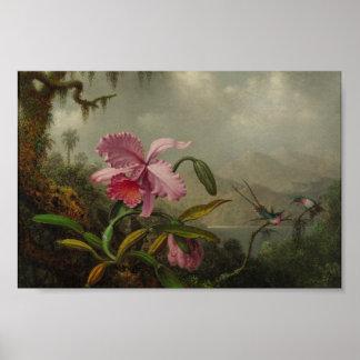 Poster Orchidées et colibris par Martin Johnson Heade