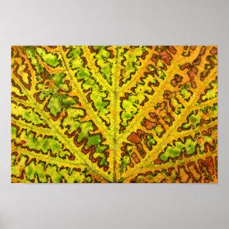 Poster orga de nature de plante de motif de texture de