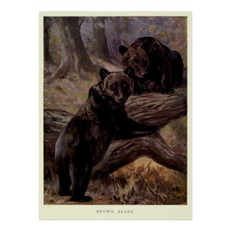 Poster Ours de Brown vintage Painting (1909)