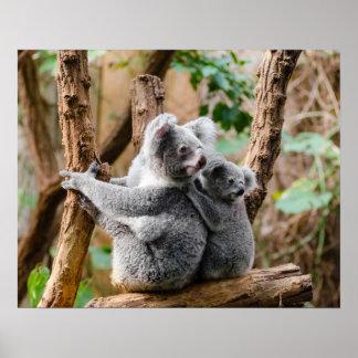 Poster Ours de koala
