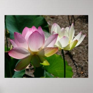 Poster Paires de fleurs de Lotus I