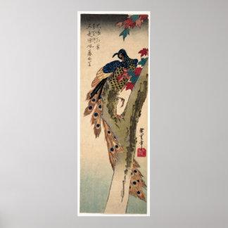 Poster Paon été perché sur un arbre d'érable