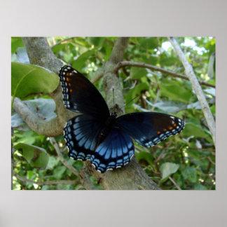 Poster Papillon bleu de machaon de l'Ohio