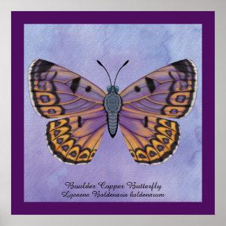 Poster Papillon de cuivre de Boulder