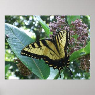 Poster Papillon de machaon I sur le Milkweed chez