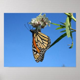 Poster Papillon de monarque avec le ciel bleu -