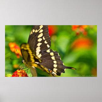 Poster Papillon géant de machaon en affiche de fleurs