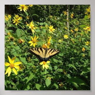 Poster Papillon jaune de queue d'hirondelle